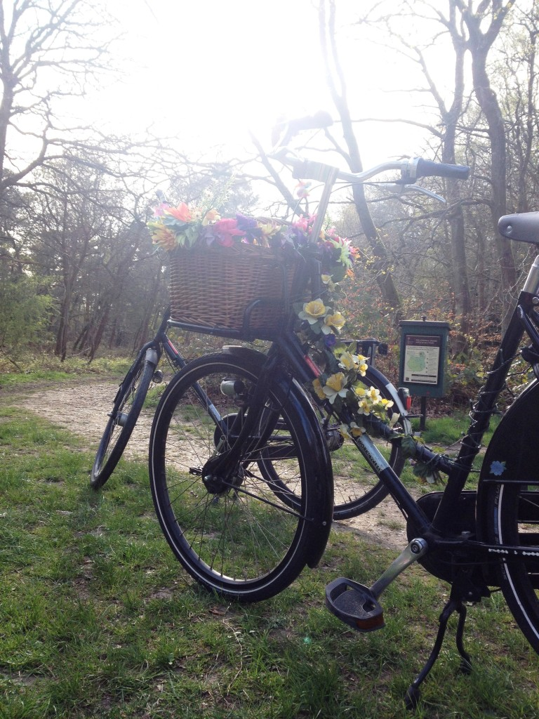 burnham-beeches-bicycles-picnic