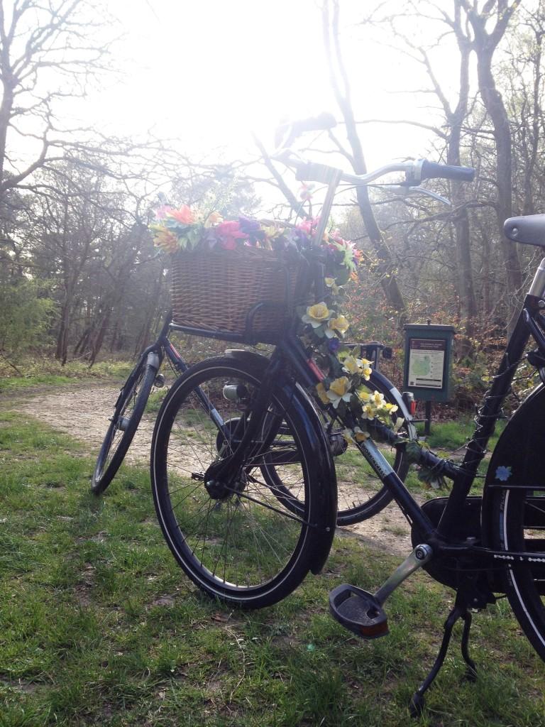 burnham-beeches-bicycles-picnic